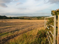 Field and gate (markgoodge) Tags: autumn nature autumngold themedalbums
