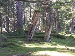 longhouse posts