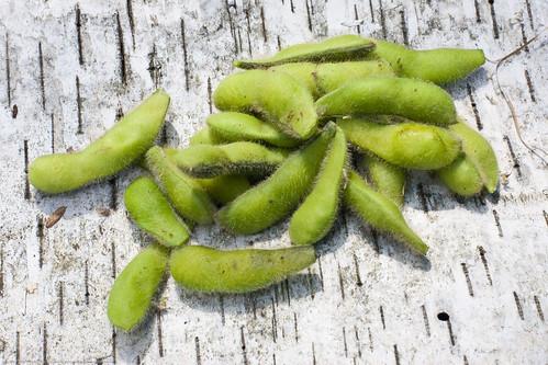 Humble Garden: soybeans