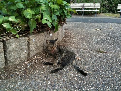 Today's Cat@20090923