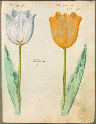 Hortulus Monheimensis 00035