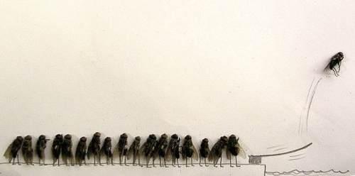 dead-flies-art-4