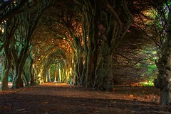 Fairytale tree tunnel. (jacco55) Tags: trees ireland dublin colour college nature canon woods tunnel yew hdr fingal balbriggan photomatix 3ex 400d gormanston