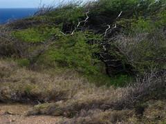 Picture 403 (Spectral Waves) Tags: foliage hanaumabay oahuhawaiiislandenvironmentlandscape