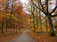 Ekebyhovsparken (Per Ola Wiberg ~ Powi) Tags: november autumn fab nature beautiful niceshot harmony sverige 1001nights 2009 breathtaking hst musictomyeyes beautifulearth goldheart supershot eker ekebyhovsparken ekebyhov natureplus royalgroup diamondheart dreamscametrue diamondclassphotographer flickrdiamond heartawards diamondstars betterthangood everydayissunday flickrestrellas crazyaboutnature peaceawards beautifulshot fotosconestilo damniwishidtakenthat abovealltherest freedomhawk artofimages addictedtonature universeofnature ~exclusivity~ todaysbest sailsevenseas beautifulkunstkamera totaltalent newgoldenseal bestpeopleschoice mygearandme diamondnaturestyle chariotsofartists peaceandheart