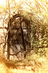 Door & Shadow (twbphotos) Tags: door southwest abandoned overgrown texas shadows elpaso weathered deserted hacienda disappearing gardendoor funwithphotoshop terrybell twbphotos