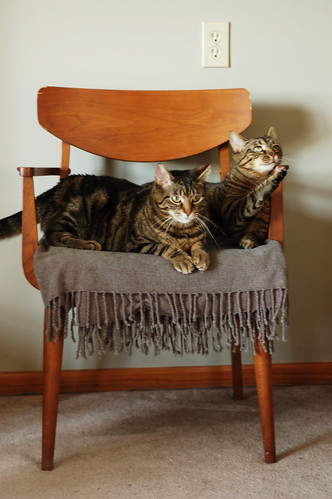 001 - Midcentury Chair with Cats