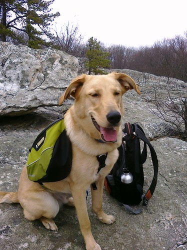 Baxter at Wolf Rock in Catoctin