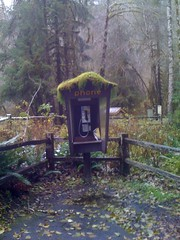 phone in the Hoh Rain Forest