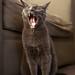 Yawn-acious