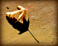 (blamstur) Tags: shadow brown leaf 15challengeswinner