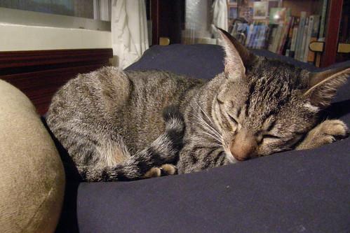 02.小捌喜歡睡在軟軟的被上