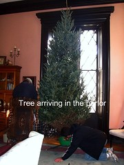 our12 foot tree being carried in to the parlor