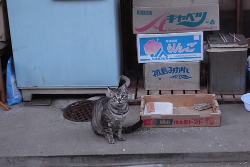 Today's Cat@20091220