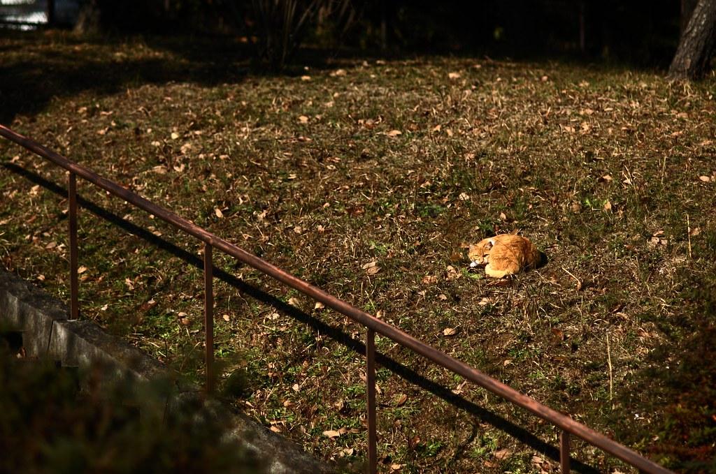 冬の猫達 #9