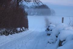 Vinter p landet 09 d70_11961 (Martins_Bilder) Tags: road snow public landscape skne sweden sverige sn scania vg landet landskap dimma mj