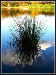 Blue Lake Beauty (moonjazz) Tags: blue wild cloud sun white lake plant color colour reflection reed nature quiet hike