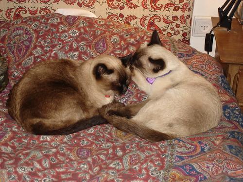 Catschka washes Her Ladyship