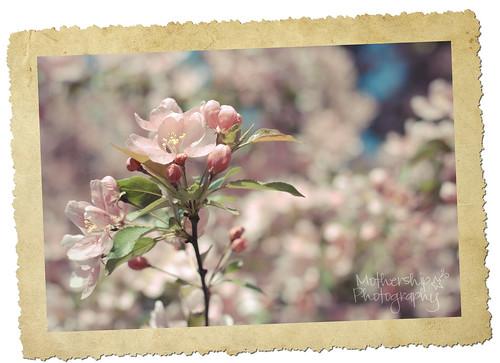 150:365 Blossoms