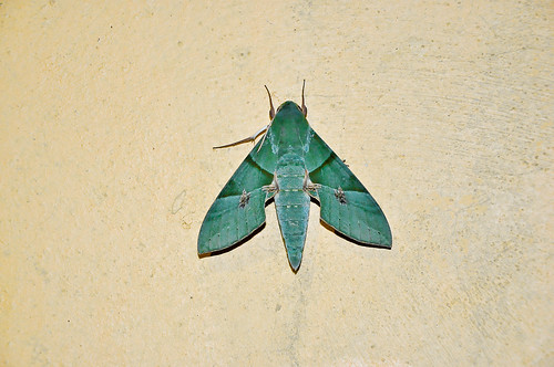 Mariposa verde (01)