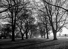 Whose woods these are I think I know. (MiguelHax) Tags: trees avenue wicksteed winter shadows kettering bw wb blackandwhite whiteandblack monochrome noiretblanc