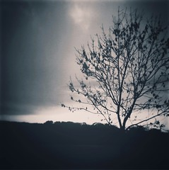 Lonely tree (awkwardfantasyjason) Tags: ukphotography photography naturephotography nature creepyphotography creepy gothicphotography gothic darkphotography dark treephotography tree