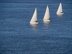 ^ ^ ^ (Betolandia) Tags: copyright sailboat sailing windy viento rosario ilegal tres veleros rioparana paranriver betolandia velereando susanagrimaldisheridan didyouknowthatitisillegaltostealpictures robarfotoses
