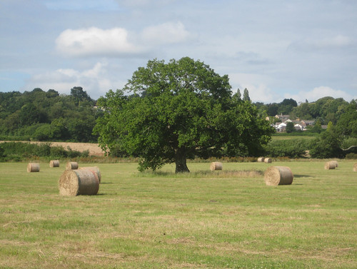 Wimborne hay bales 1
