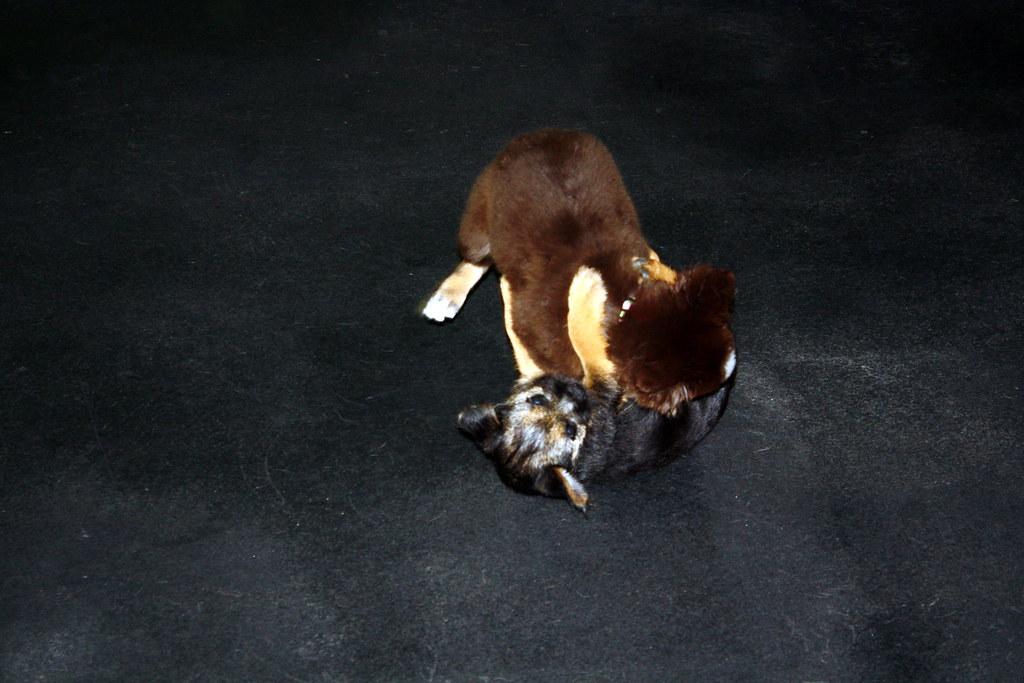 Woofs Puppy K 3