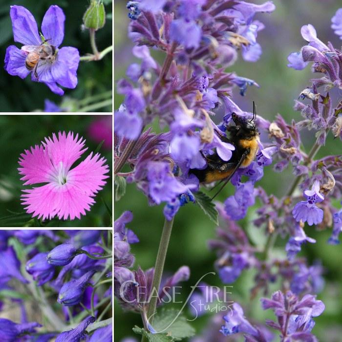 08-06-flowers4
