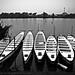 White Canoes