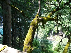 Trees (Haydi_313) Tags: trees mossy