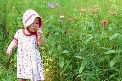Travel Log : Day 2 - West Virginia (Frontier Dreams) Tags: westvirginia wildflowers oregontrail