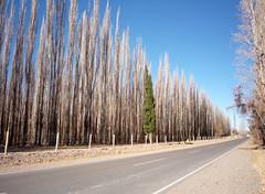Argentina 2009 - 013