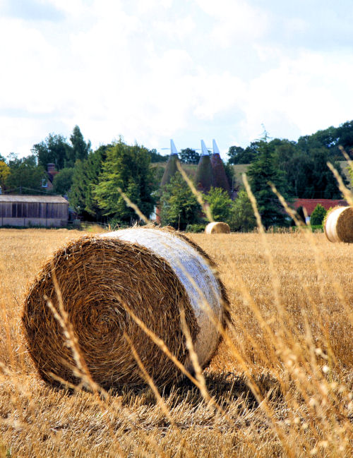 Hay Bales in the English Countryside 4915