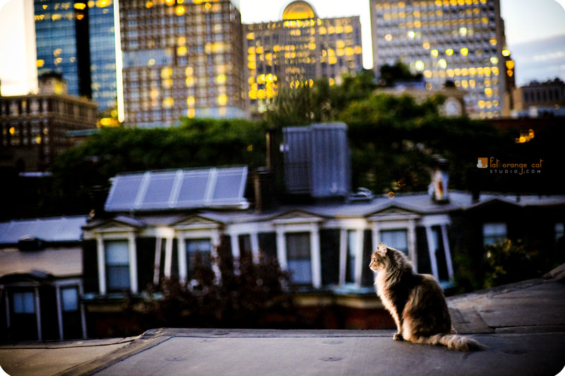 Bella on the roof