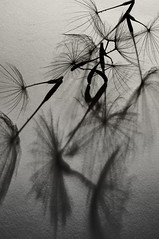 Seeds (Harold Davis) Tags: harolddavis shadows 8legs