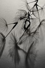 Seeds (Harold Davis) Tags: harolddavis shadows 8legs
