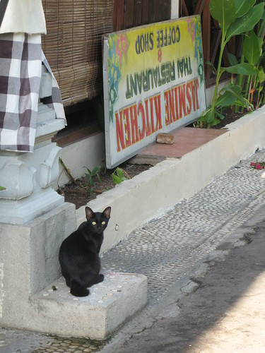 Black Kittie