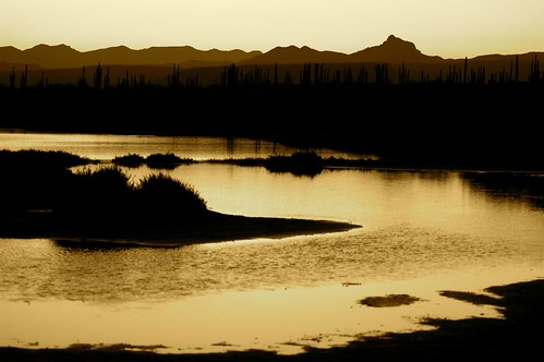 Desierto? by Inès Arámburo.