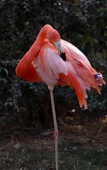 zoo de fort mardyck