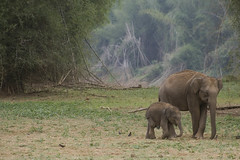 mother love (Murthy MP) Tags: elephant wildlife tcs kabini motherlove specanimal impressedbeauty