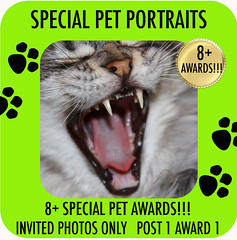 Choice 2 - 8+ SPECIAL PET PORTRAITS psd
