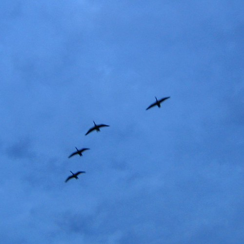 4 flying geese SQ