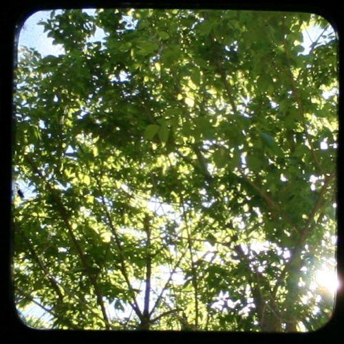 through the viewfinder