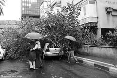 Rainy Day (xnir) Tags: nir  benyosef xnir  rainydayebengvirolboulevard telavivisraelnirxnirwinterumbrella photoxnirgmailcom