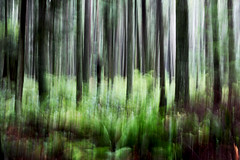 Spirit They're Gone... (Bhlubarber) Tags: park trees abstract motion blur green art vancouver forest movement woods pacific spirit fv5 impressions wilderness impressionistic davidniddrie