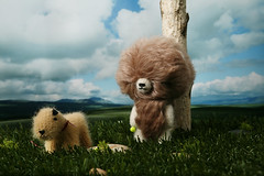 Playing catch with Bradford (TADA's Revolution) Tags: bear dog puppy miniature handmade oneofakind ooak crochet craft plush tennis terrier softie stuffedanimal kawaii catch doggy rement amigurumi diorama crafting welshterrier stuffie