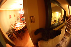 Fisheye diningroom to livingroom to upstairs... (hpulley) Tags: fisheye peleng8mmf35 canondigitalrebeleost1i pentaxscrewtoefmountconverter