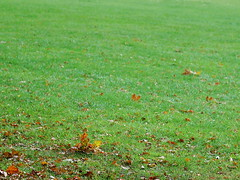 South Park Grass (basswulf) Tags: uk autumn wallpaper england green grass leaves lenstagged gimp oxford 43 digitaldarkroom d40 camerasetting:aperture=f56 vivitar90mmf25macro permissions:licence=c 2400x1800 200910 image:ratio=43 20091022 releaseaiweiwei